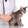 Ветеринарные клиники в Белгороде